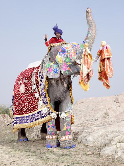 05-india-elephant-painted-floral-rainbow-580v