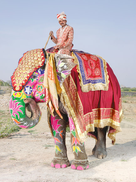 07-india-elephant-painted-rainbow-floral-curled-trunk-580v
