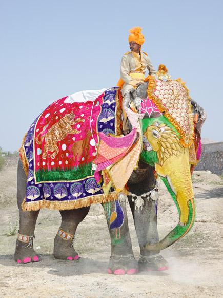 11-india-elephant-painted-gold-lion-580v