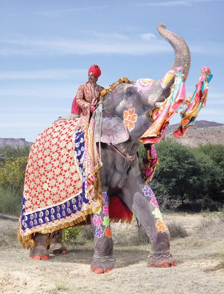 12-india-elephant-painted-sparse-flowers-580v