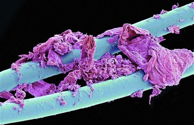 microscope5