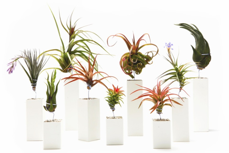 Airplantman-Can-Help-Your-Airplants-2