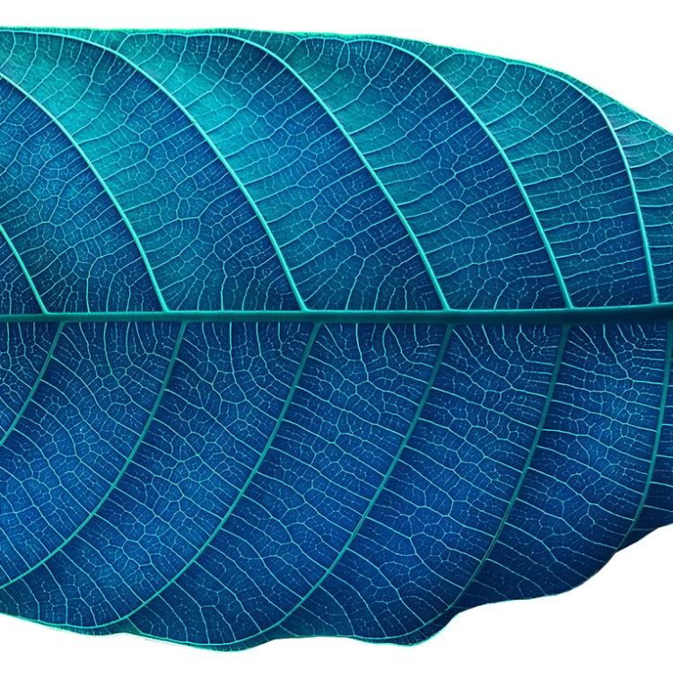 blueLeafdetail