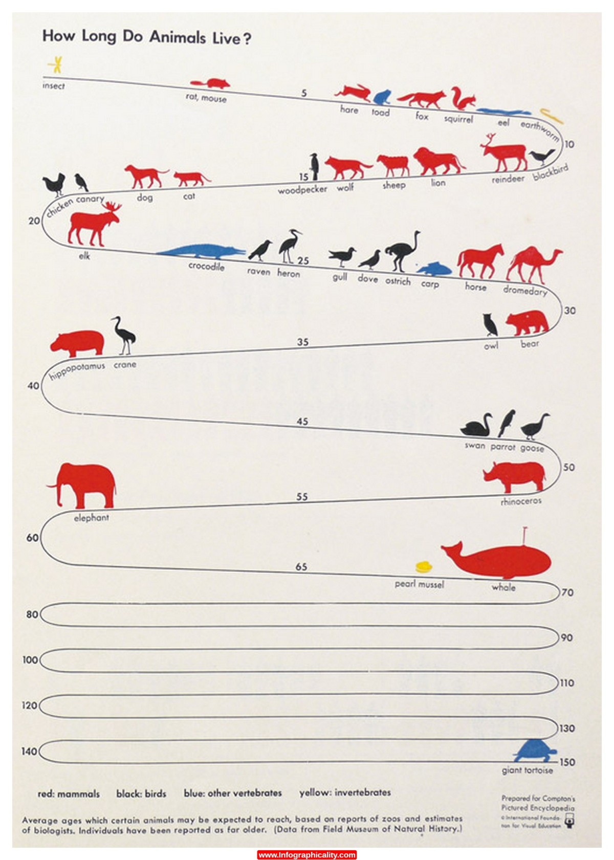 how long do animals live 1 Infographic