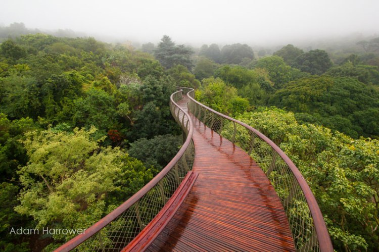 kirstenbosch-tree-canopy-walkway-cape-town-south-africa-1