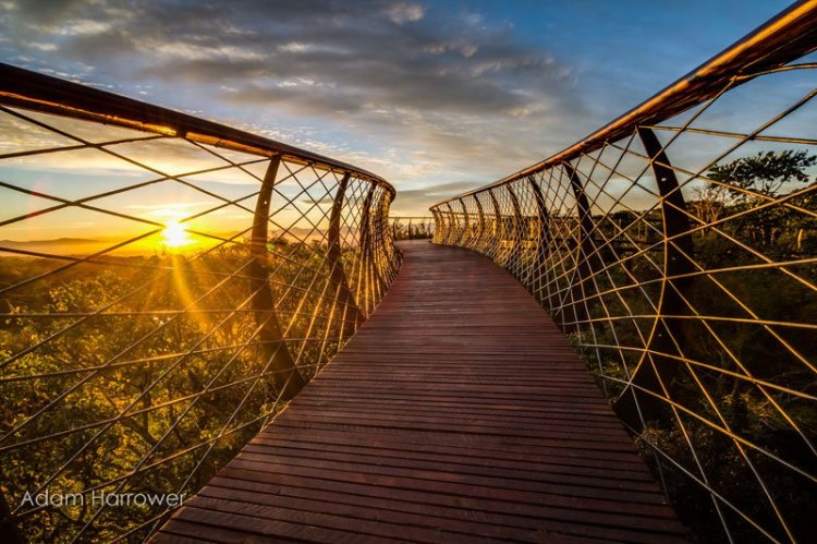 kirstenbosch-tree-canopy-walkway-cape-town-south-africa-15