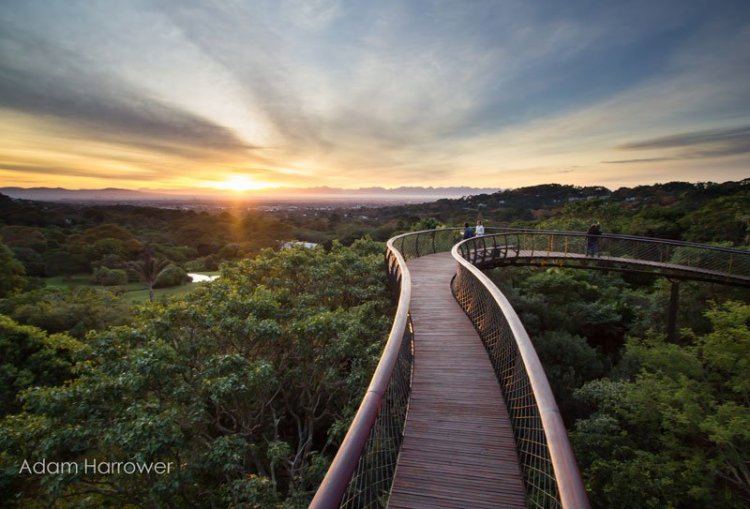 kirstenbosch-tree-canopy-walkway-cape-town-south-africa-4