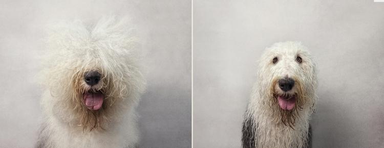 dry_dog_wet_dog_photo_series_Serena_hodson_06