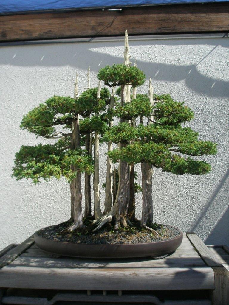goshin-by-john-naka-bonsai-forest-for-grandchildren-1