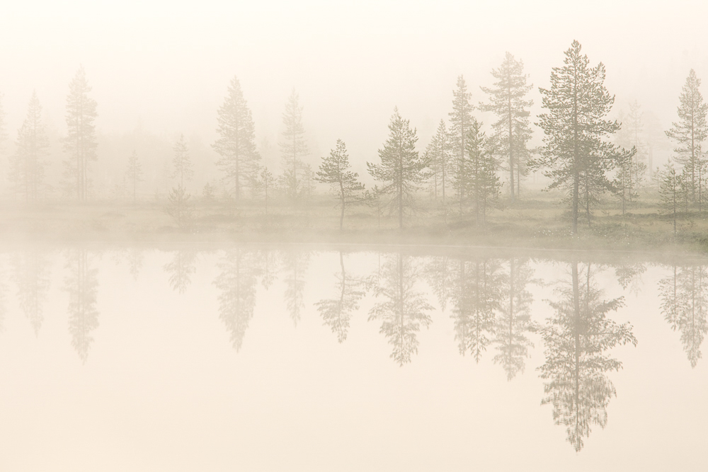 Early in Lapland // Moss and Fog