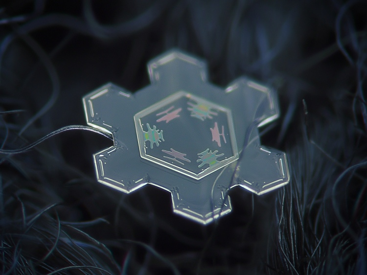 Amazing snowflakes in macro // Moss and Fog