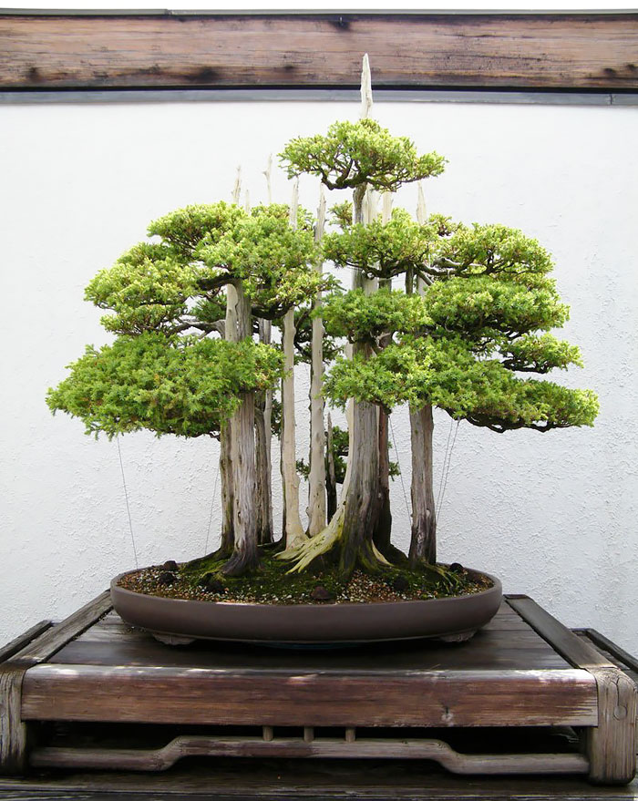 amazing-bonsai-trees-13-5710ed962c1f6__700