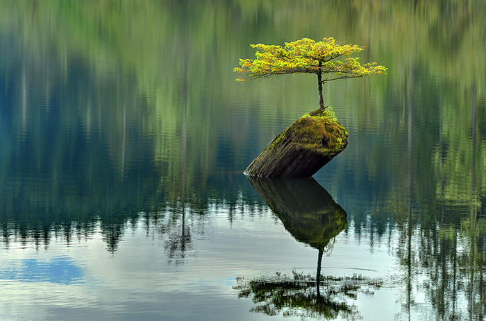 amazing-bonsai-trees-33-5710fb98a901e__700