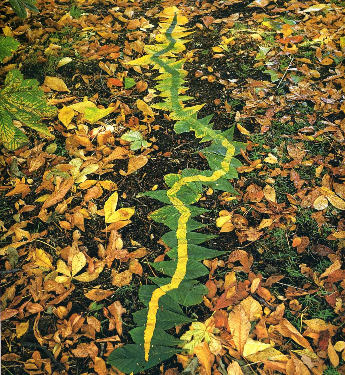 goldsworthy-moss-and-fog