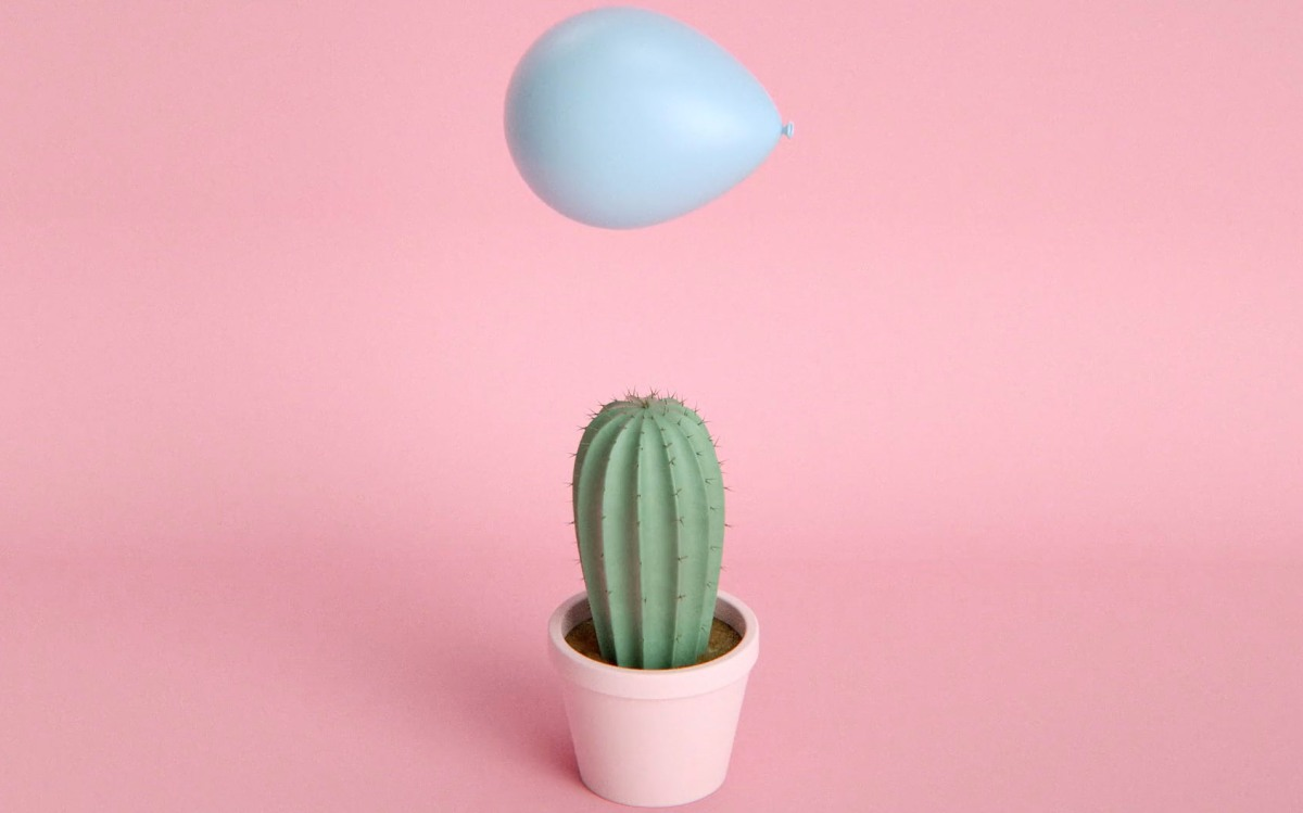 cactus-balloon-moss-and-fog