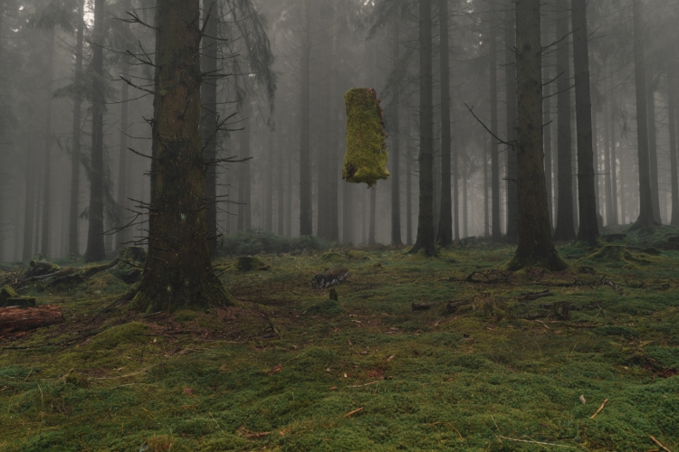 floating-forest-moss-and-fog-3
