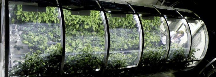 nasa-mars-greenhouse-moss and fog 1