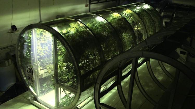 nasa-mars-greenhouse-moss and fog 2