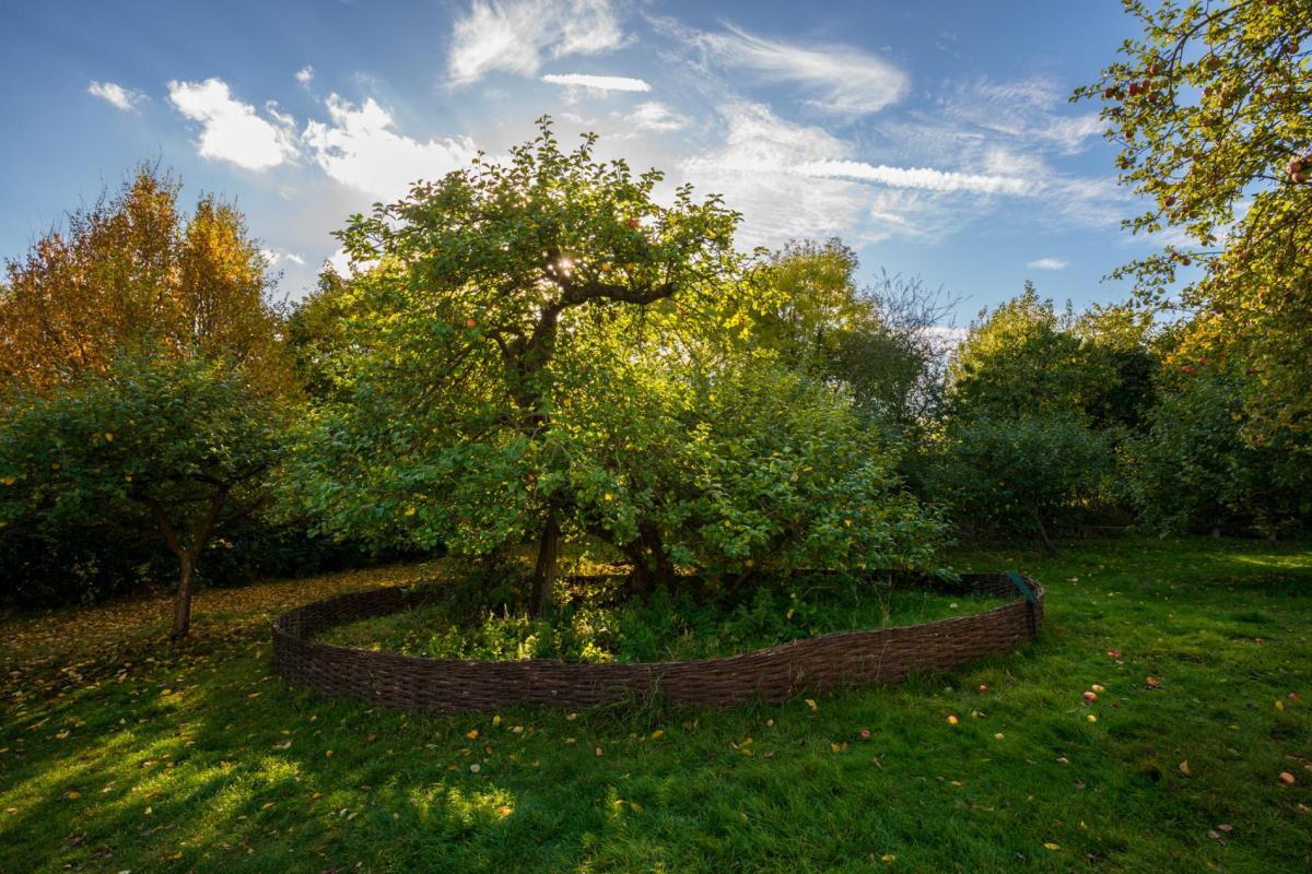trees-isaac-newton-england.adapt.1900.1