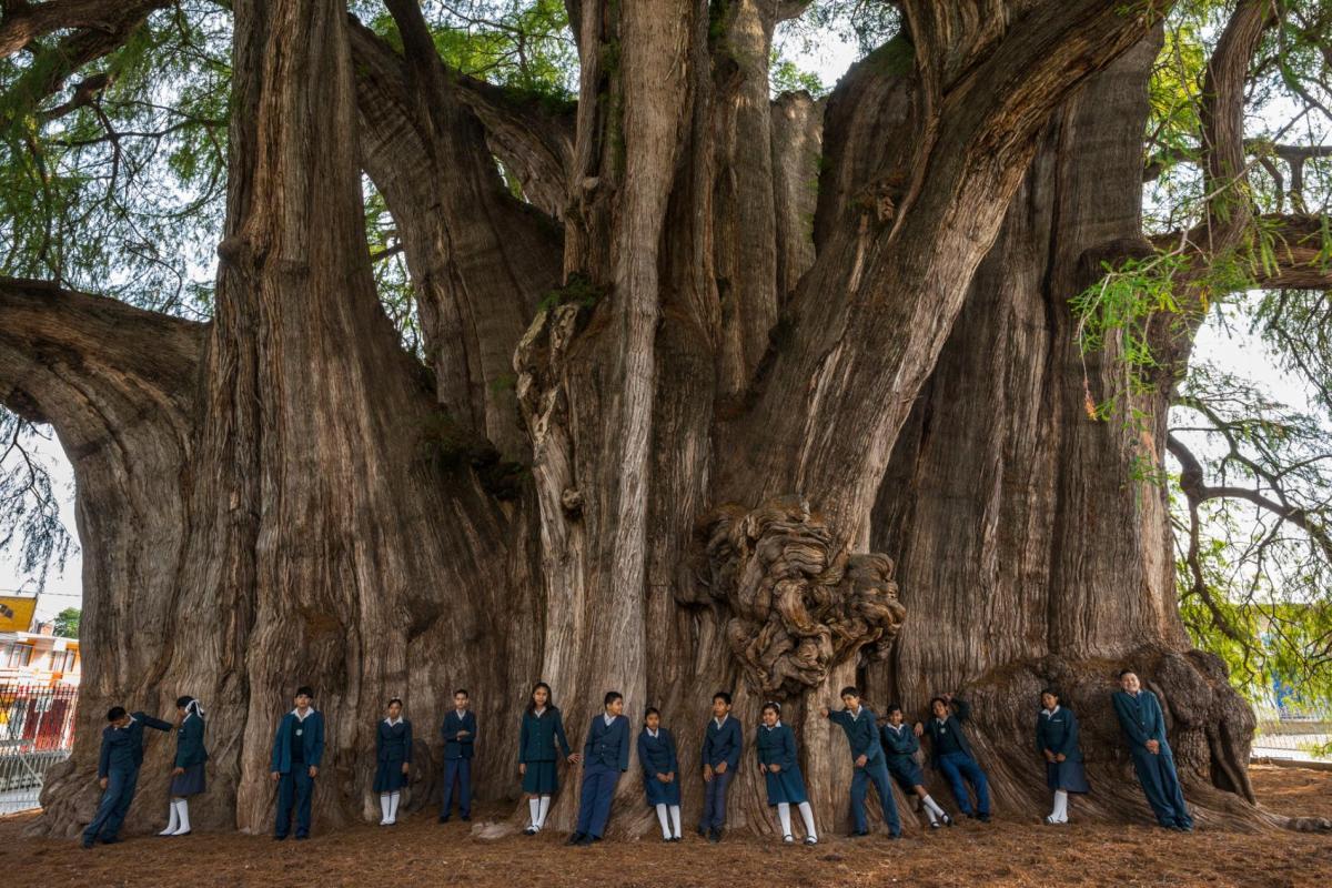 trees-mexico-ancient-children.adapt.1900.1