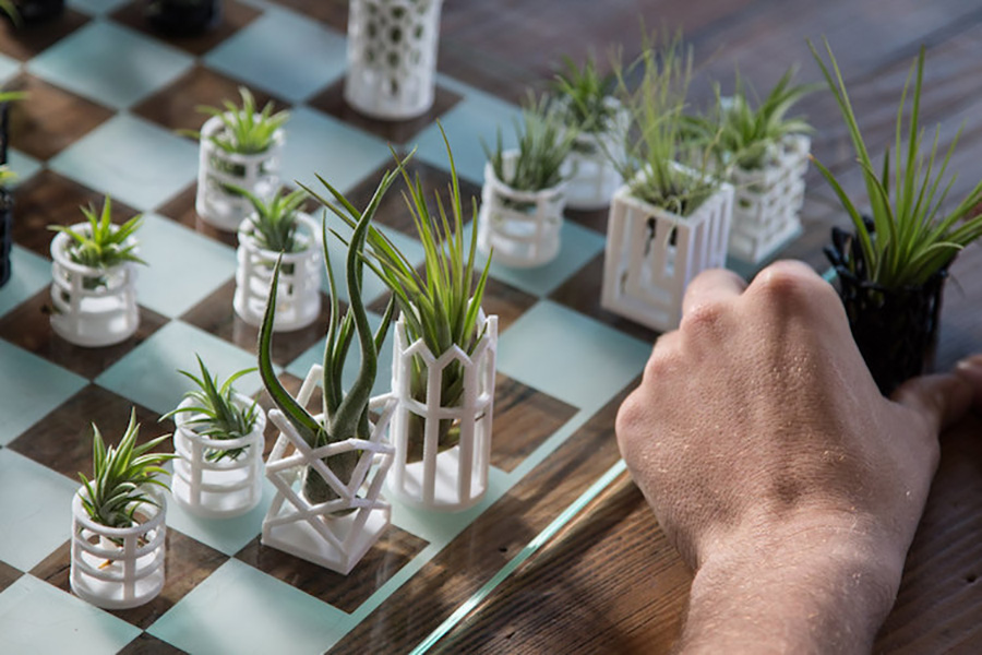 chess-planters-moss and fog 1