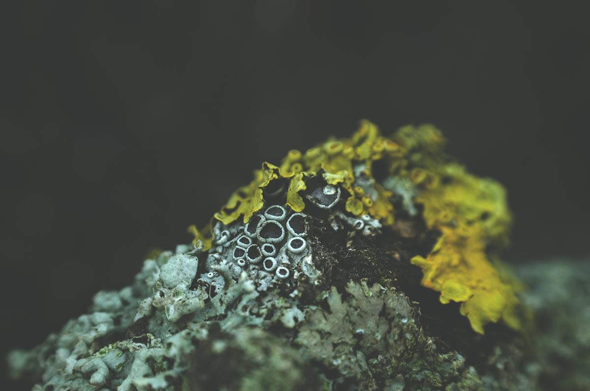 fairytale woods moss and fog 1