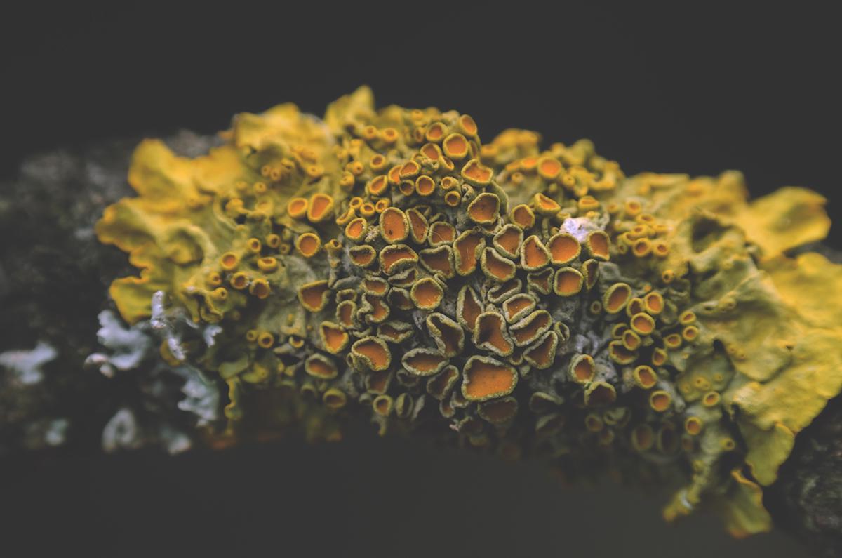 fairytale woods moss and fog 4